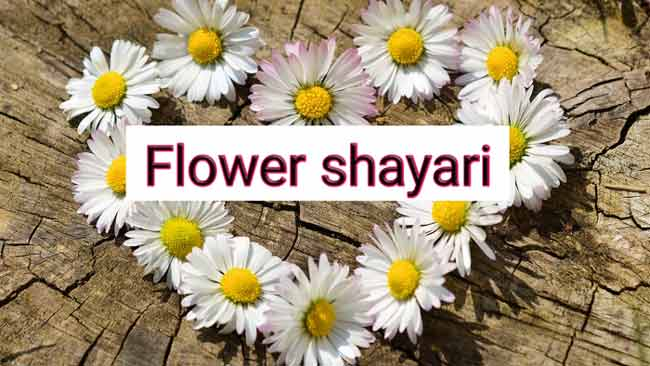 Flowers shayari in hindi