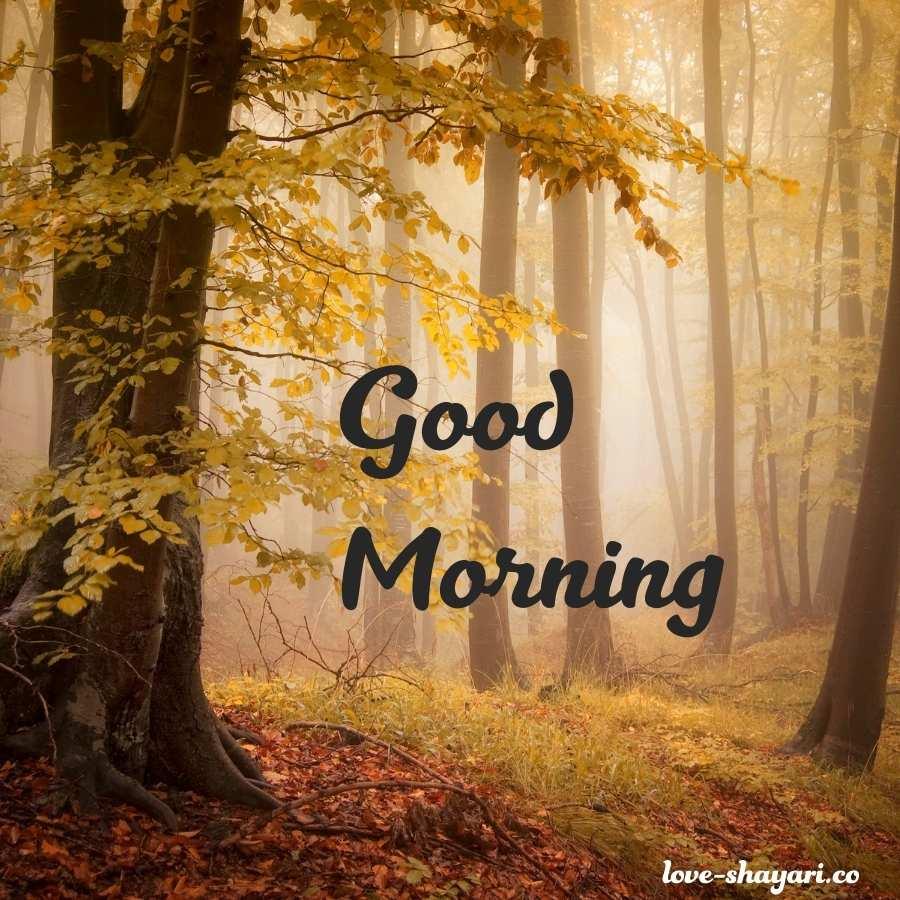 good morning shayri images