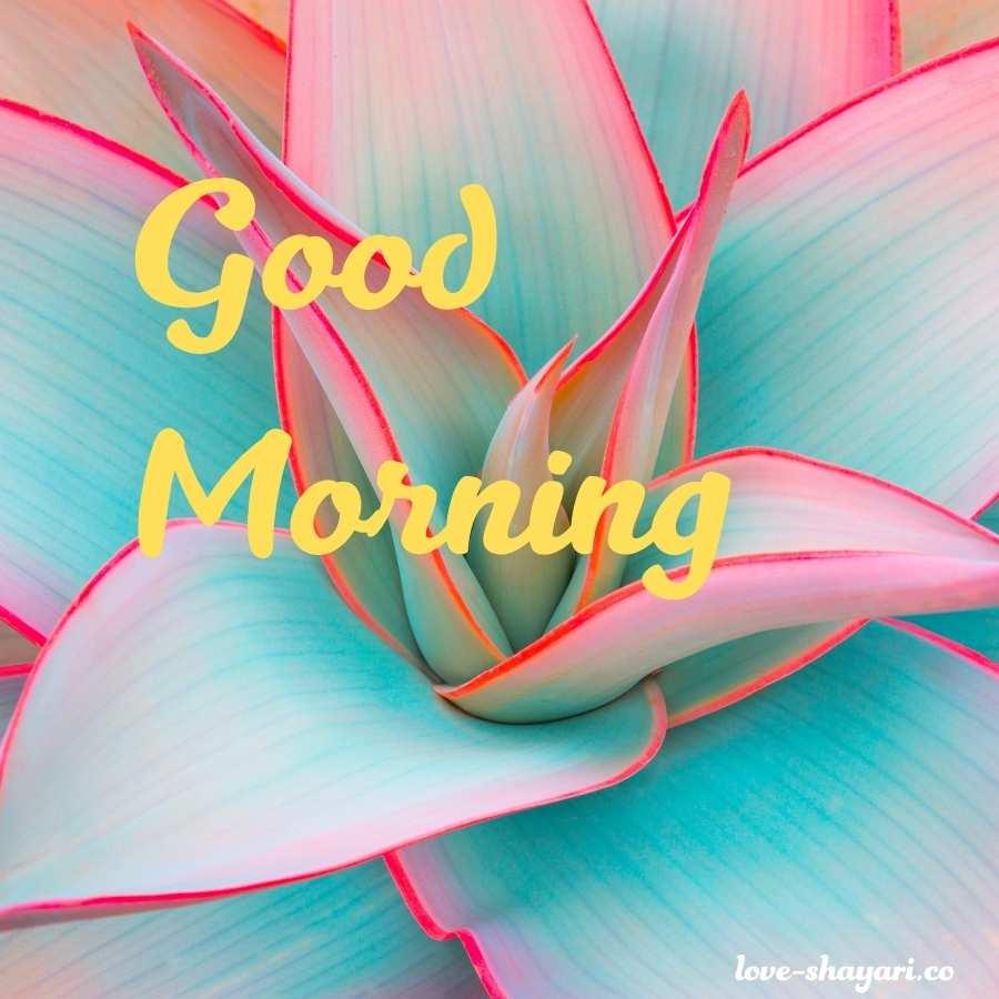 good morning jaan shayari